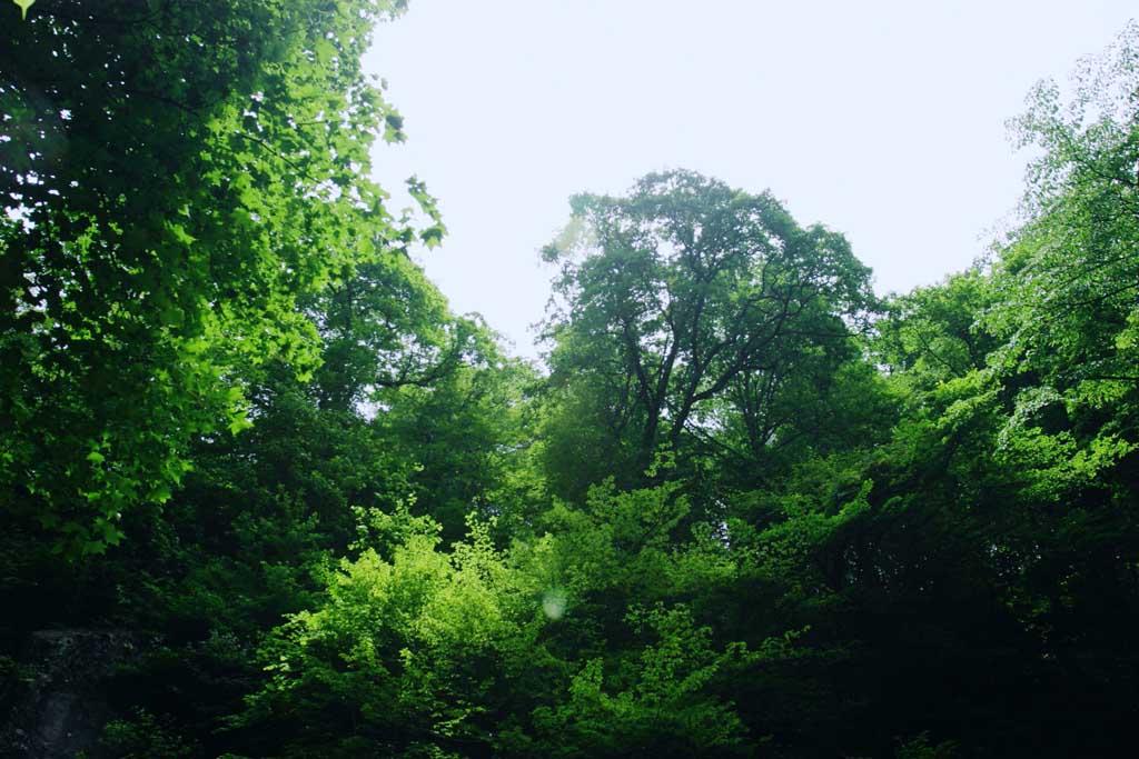 foto,tela,gratis,paisaje,fotografía,idea,Verdor a la vista., Cascada, Río, Verde tierno,