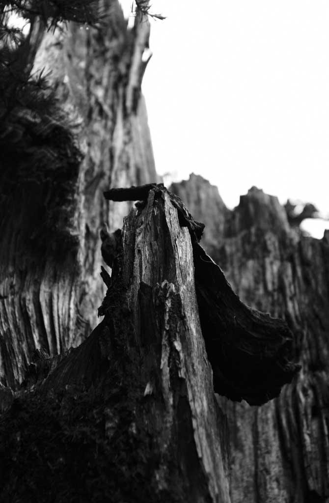 צילום, חינם גשמי, נוף, מדמין, צילום של מלאי ,בהיקות דהה של ארז ישן , ארז, עץ, לקמול,