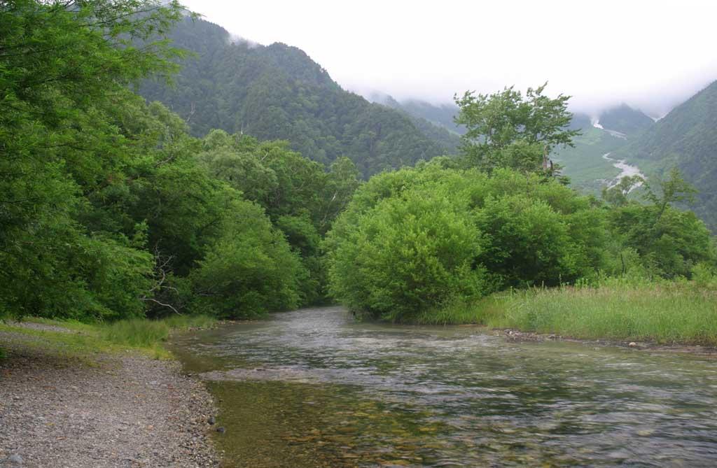 Foto, materieel, vrij, landschap, schilderstuk, bevoorraden foto,Kreek en bomen, Rivier, Boom, Water, Berg