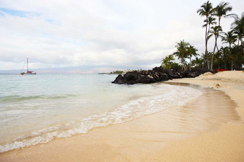 photo,material,free,landscape,picture,stock photo,Creative Commons,A private beach, sandy beach, palm tree, wave, yacht