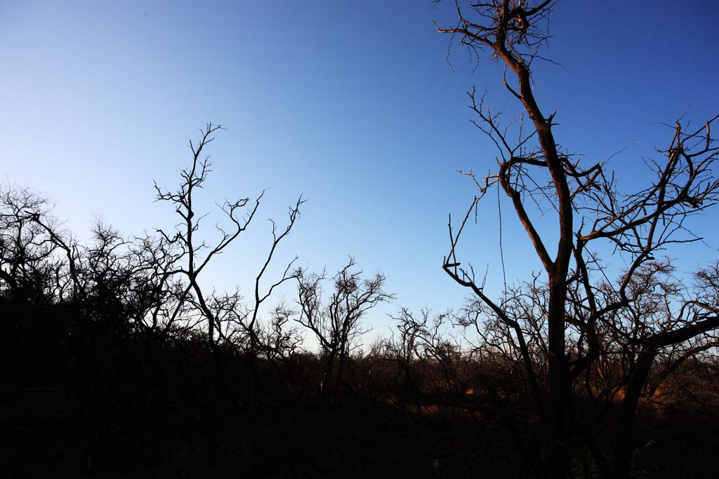 photo,material,free,landscape,picture,stock photo,Creative Commons,A dead tree of the lava, Lava, forest fire, branch, Drying