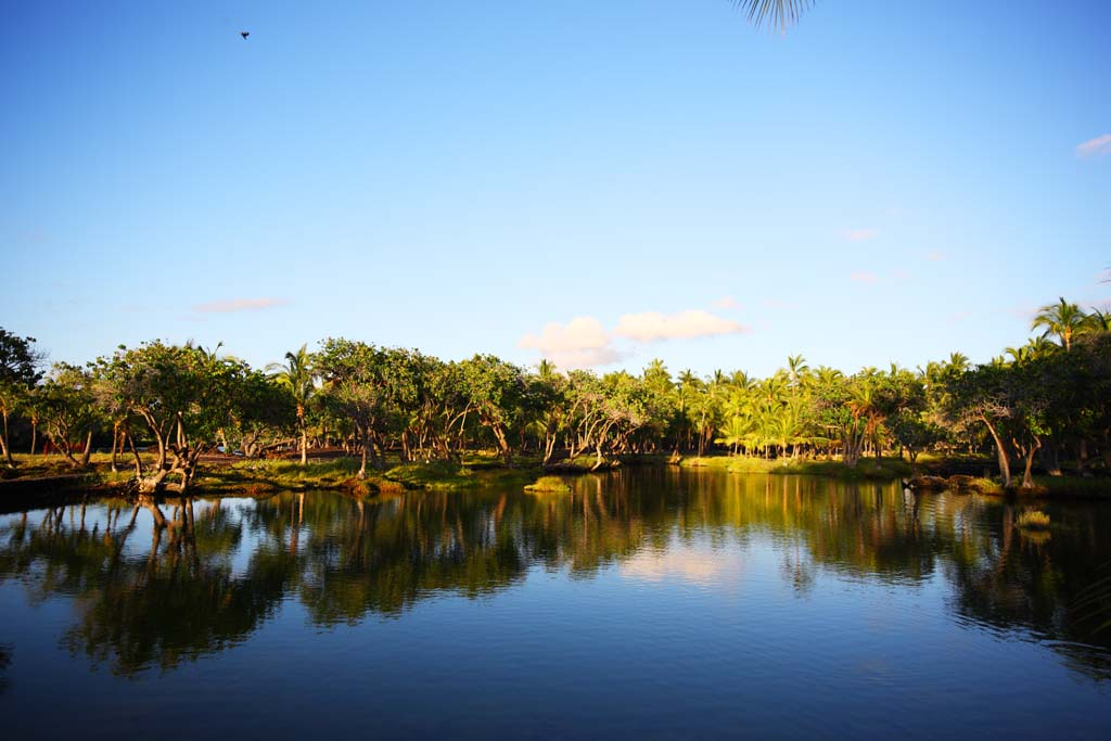 photo,material,free,landscape,picture,stock photo,Creative Commons,Power spot MaunaLani, Lava, An altar, pond, Fishery