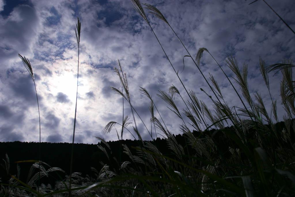 photo, la mati�re, libre, am�nage, d�crivez, photo de la r�serve,L'herbe de l'argent subtile, profonde a class�, herbe argent, , , prairie