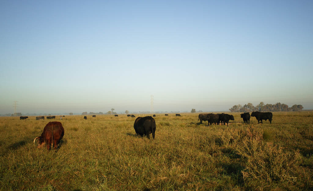 photo,material,free,landscape,picture,stock photo,Creative Commons,Hometown of American beef, ranch, cow, Grass, farm