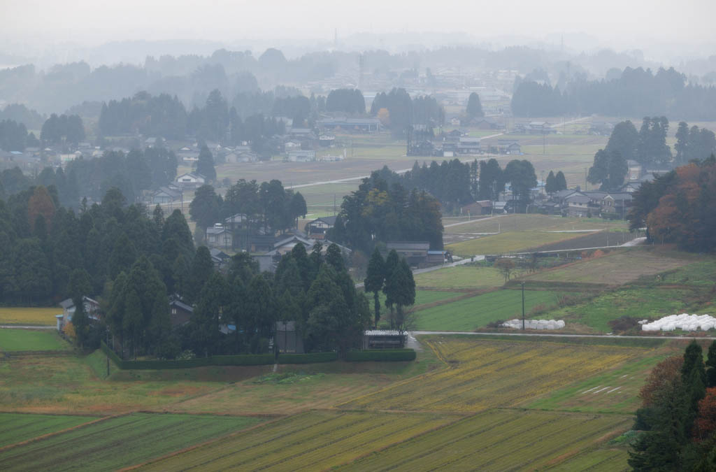 photo,material,free,landscape,picture,stock photo,Creative Commons,Farm village in Asaka, farm village, field, private house, windbreak forest