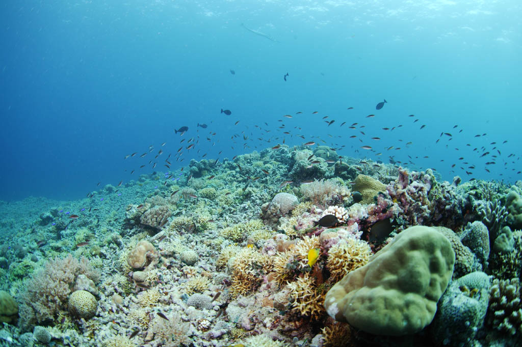 photo, la matière, libre, aménage, décrivez, photo de la réserve,Un récif corail et poisson tropique, récif corail, poisson, La mer, La surface de la mer