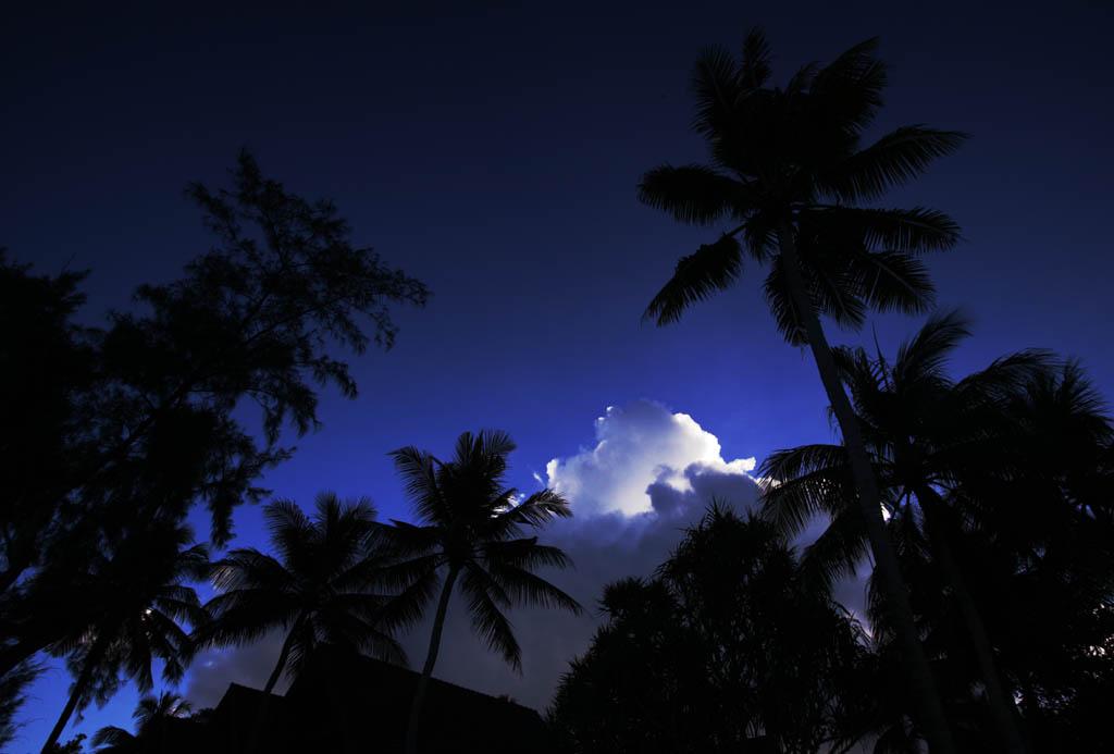 写真,素材,無料,フリー,フォト,クリエイティブ・コモンズ,風景,壁紙,南国の輝ける雲, 椰子, 雲, ヤシ, 青空