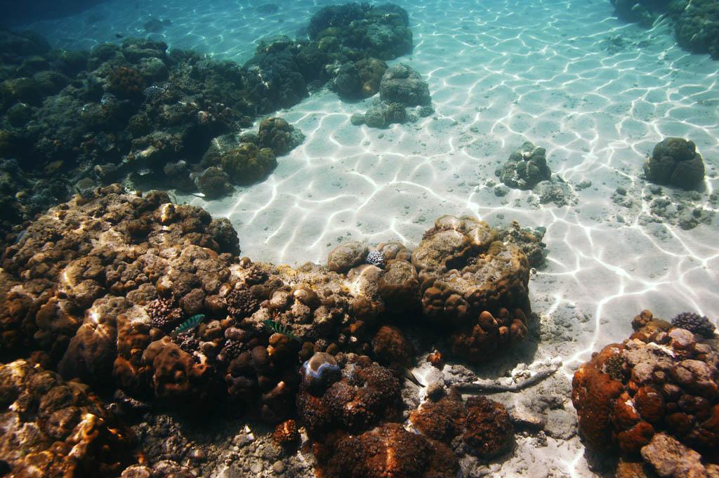 foto,tela,gratis,paisaje,fotograf�a,idea,Un art�culo ligero de una onda, El mar, Coral, Coral, En el mar