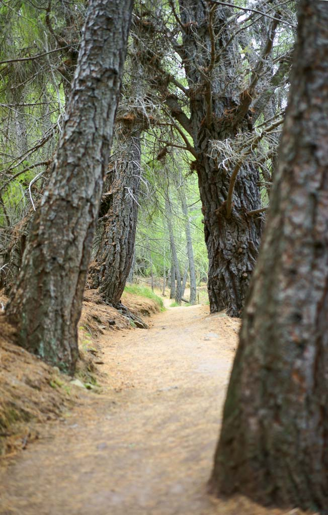 photo,material,free,landscape,picture,stock photo,Creative Commons,Mountain trail, , , ,