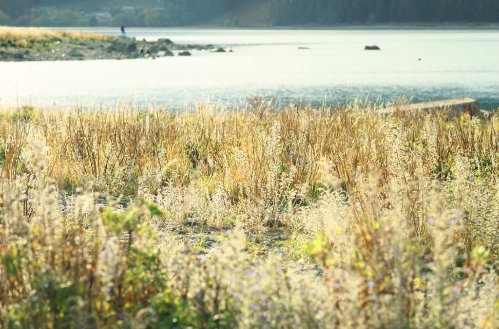 photo,material,free,landscape,picture,stock photo,Creative Commons,Lakeside, , , ,