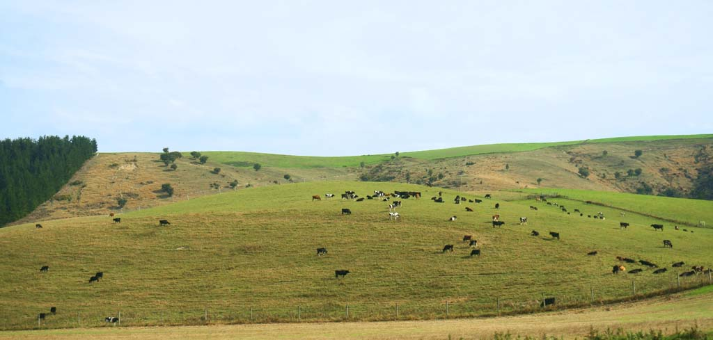 photo,material,free,landscape,picture,stock photo,Creative Commons,Ranch, , , ,