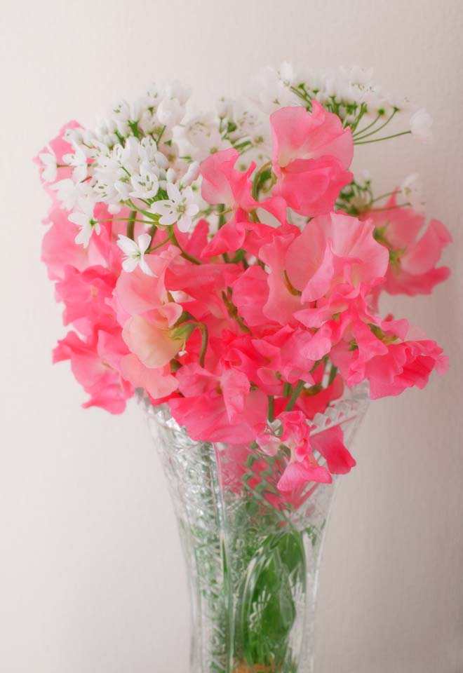 No 2402 Flower Arrangement Of Sweet Pea