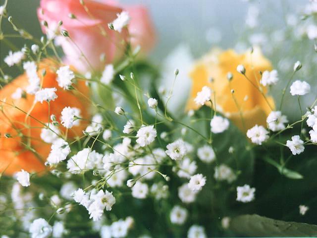 photo,material,free,landscape,picture,stock photo,Creative Commons,Bouquet, bouquet, , ,