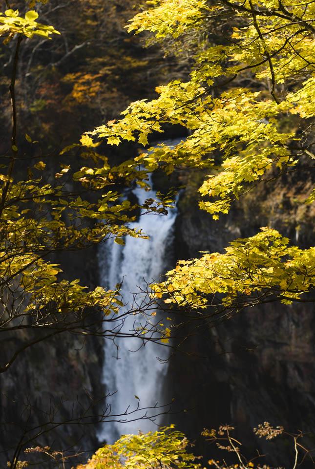 fotografia, materiale, libero il panorama, dipinga, fotografia di scorta,Foglie colorate della luce del sole cascate di Kegon, cascata, Acero, cielo blu, Bave culla