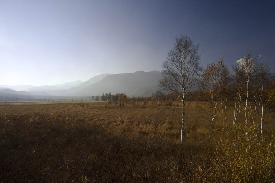 photo,material,free,landscape,picture,stock photo,Creative Commons,Senjogahara in late fall, grassy plain, , White birch, blue sky