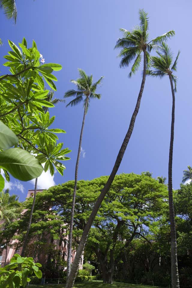 photo,material,free,landscape,picture,stock photo,Creative Commons,The Hawaiian sky, coconut tree, The sun, Lasi, blue sky