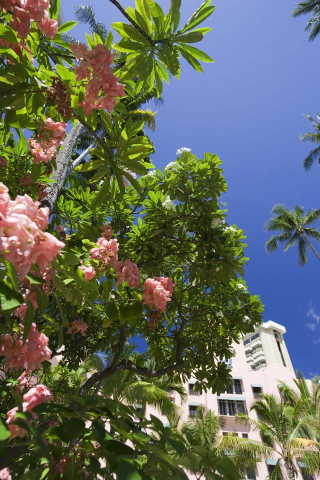 photo,material,free,landscape,picture,stock photo,Creative Commons,A Hawaiian flower, flower, The tropical zone, I am green, blue sky