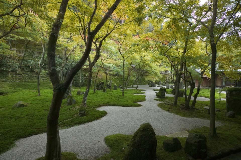 foto,tela,gratis,paisaje,fotografía,idea,Un jardín de un templo claro pertenecer al secta de Zen, Moss, , Roca, Permisos de color