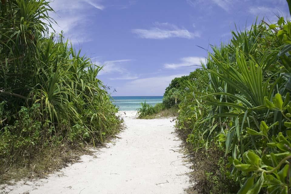 Фото, материальный, свободный, пейзаж, фотография, фото фонда.,Путь в пляж., Брусок песка, Пляж, Синее небо,