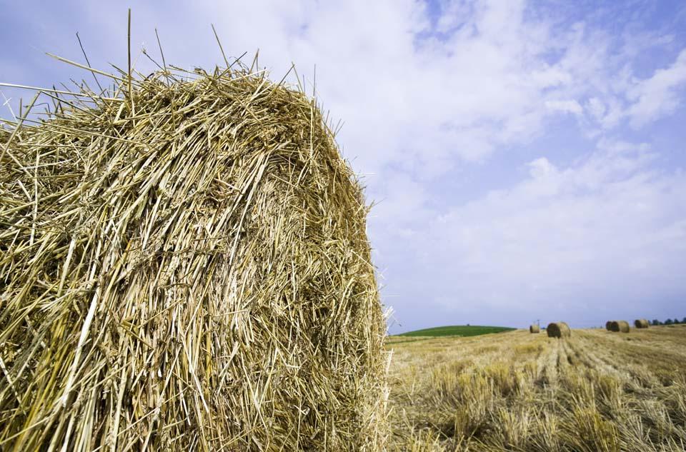 写真,素材,無料,フリー,フォト,クリエイティブ・コモンズ,風景,壁紙,牧草ロール, 牧草ロール, 麦わら, 藁, 飼料