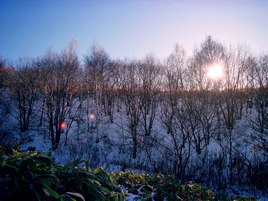 写真,素材,無料,フリー,フォト,クリエイティブ・コモンズ,風景,壁紙,初冬の森の太陽, 山, 青空, ,