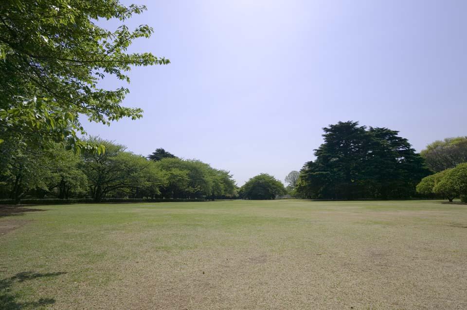 Foto, materieel, vrij, landschap, schilderstuk, bevoorraden foto,Een grasveld van een park, Grasveld, , Stel ruimte open, Boom