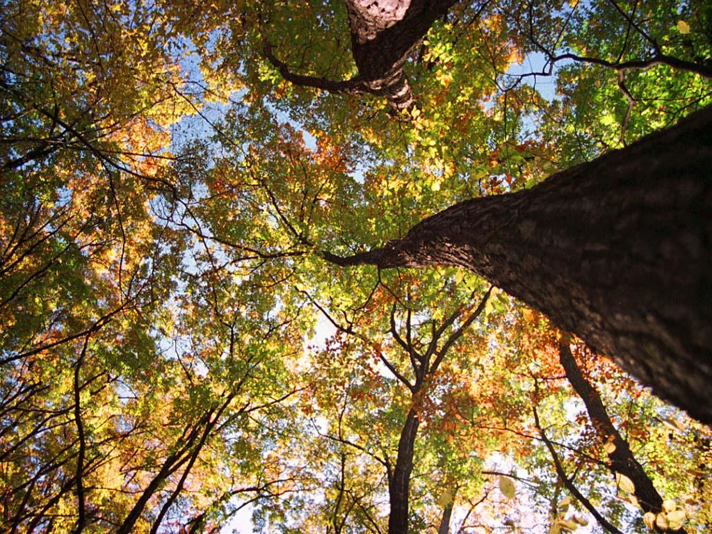 foto,tela,gratis,paisaje,fotografía,idea,Camino al cielo..., Permisos de otoño, , ,
