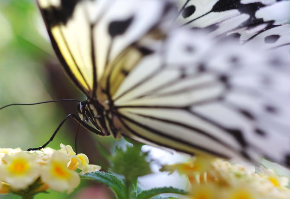 photo,material,free,landscape,picture,stock photo,Creative Commons,Beauty of a butterfly, butterfly, , , flower