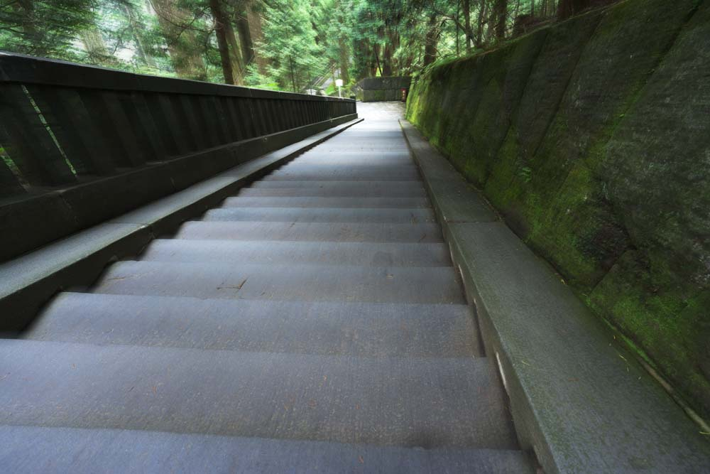 photo,material,free,landscape,picture,stock photo,Creative Commons,A stone stairway of Tosho-gu Shrine, stone stairway, Stairs, Moss, cedar