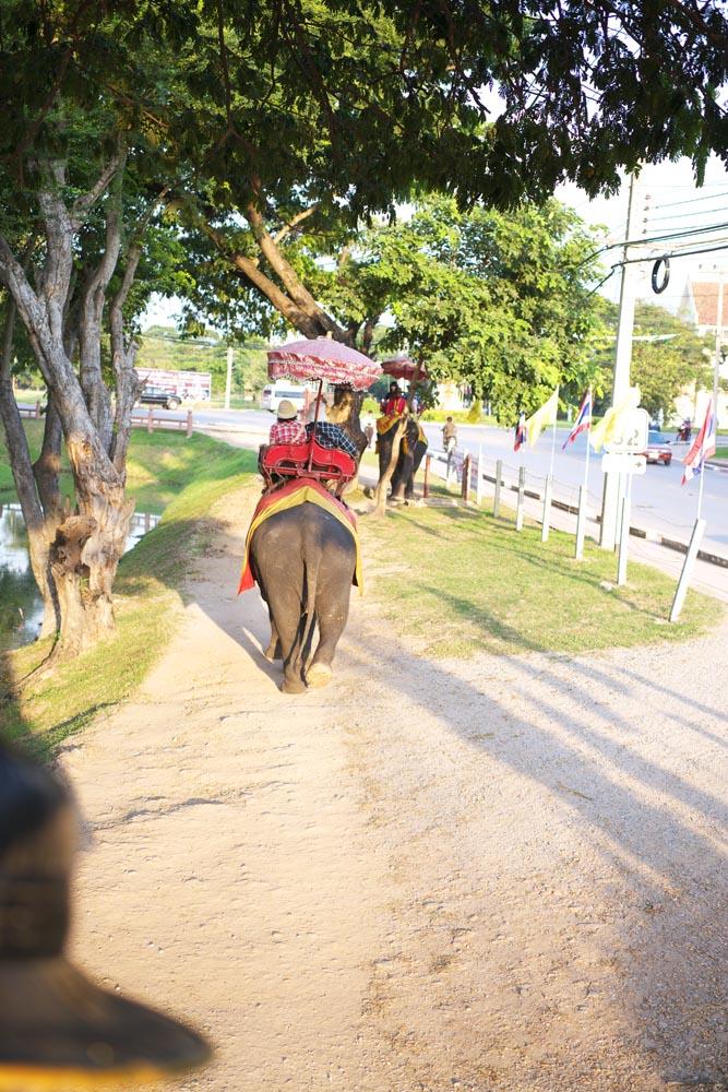 写真,素材,無料,フリー,フォト,クリエイティブ・コモンズ,風景,壁紙,タイの象乗り, 象, ぞう, ゾウ, パラソル
