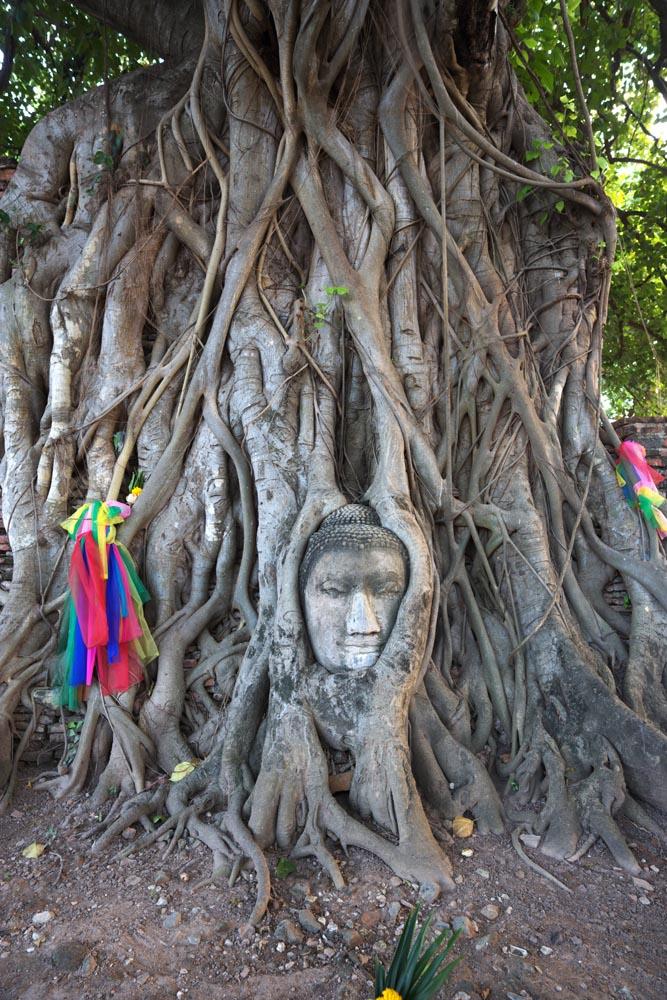 写真,素材,無料,フリー,フォト,クリエイティブ・コモンズ,風景,壁紙,ワット・プラ・マハタートの仏頭, 世界文化遺産, 仏教, 仏頭, アユタヤ遺跡