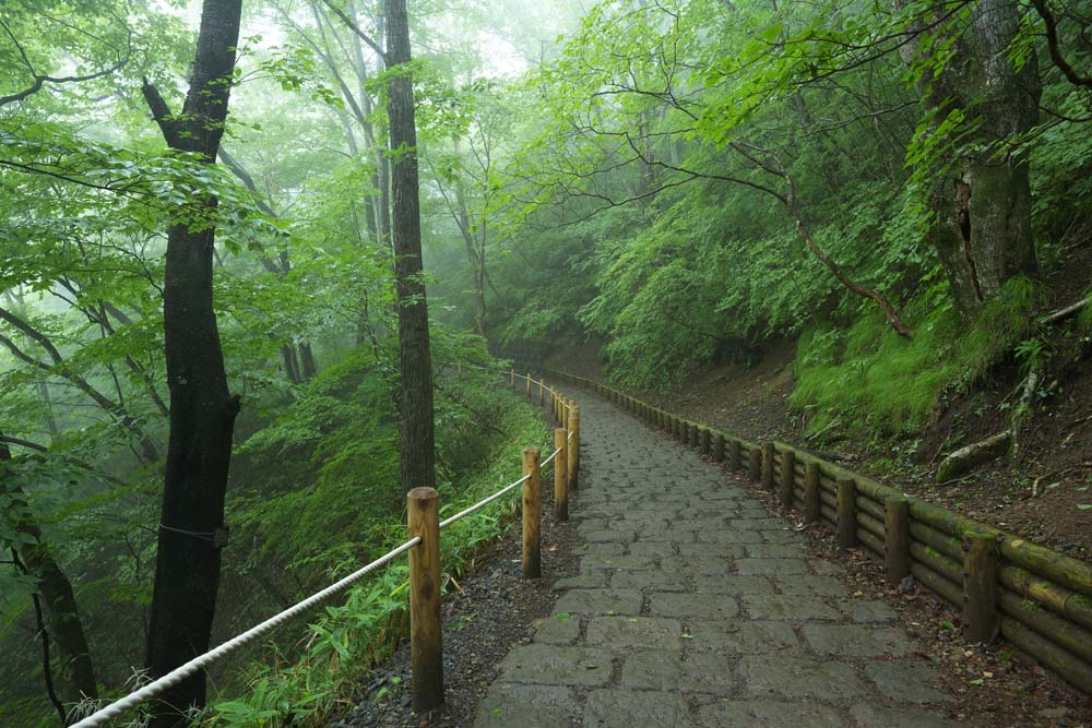 photo,material,free,landscape,picture,stock photo,Creative Commons,I pass away in a fog falling forest, tree, foggy, Fog, stone pavement
