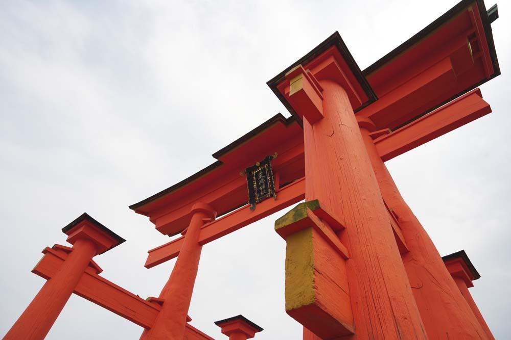 fotografia, material, livra, ajardine, imagine, proveja fotografia,Otorii de santu�rio de Itsukushima-jinja, A heran�a cultural de mundo, Otorii, Santu�rio de Xinto�smo, Eu sou vermelho de cin�brio
