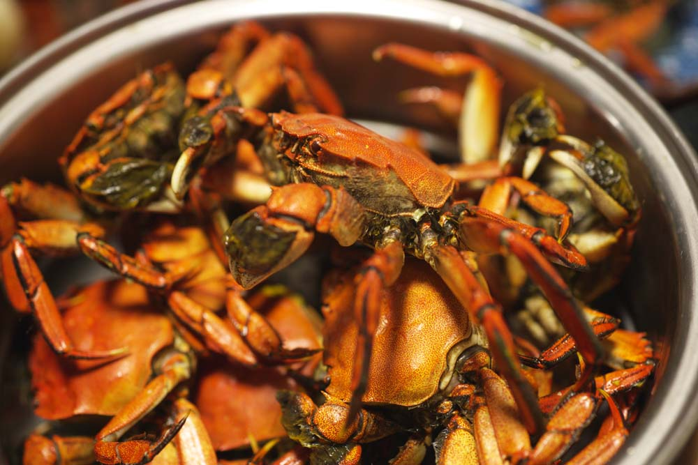 photo,material,free,landscape,picture,stock photo,Creative Commons,crabs in a pan, crab, , , Scissors