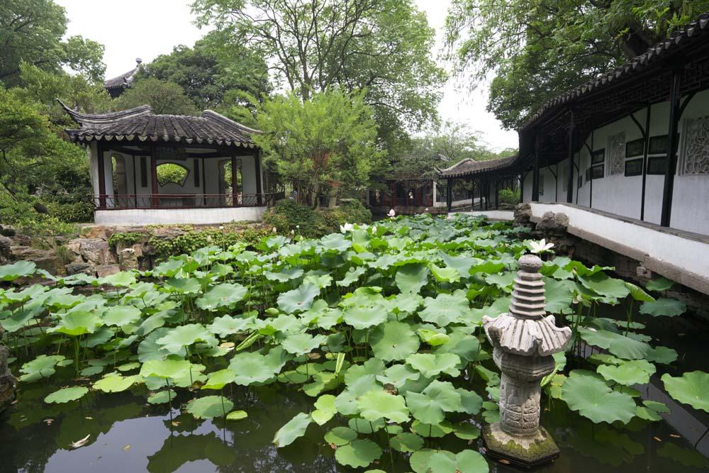 Foto, materiell, befreit, Landschaft, Bild, hat Foto auf Lager,Hasuike von Zhuozhengyuan, Teich, Lotosblume, , Garten