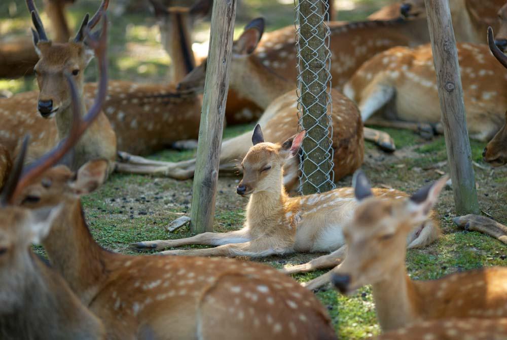 ������,������,���,���� �������,����,���,����� ���������� Nara.  , , �������., ����� ����������.  , Bambi.