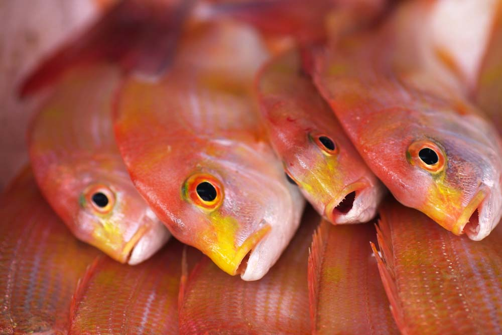 photo,material,free,landscape,picture,stock photo,Creative Commons,The red of the sea bream, Thailand, sea bream, , fish shop