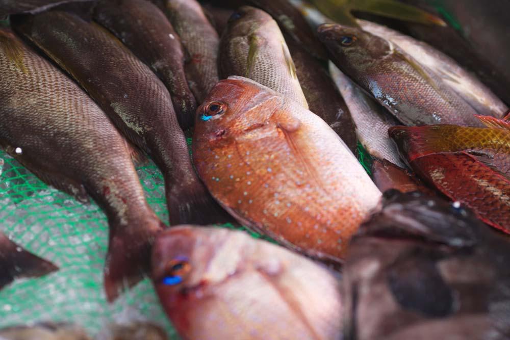 photo,material,free,landscape,picture,stock photo,Creative Commons,A fish shop, Thailand, sea bream, , fish shop