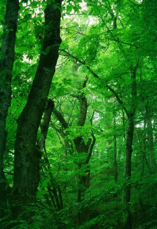 foto,tela,gratis,paisaje,fotografía,idea,El verde del bosque., Árbol, Arboleda, Rama,