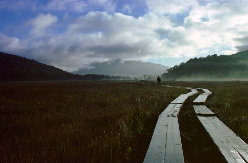 Фото, материальный, свободный, пейзаж, фотография, фото фонда.,Меланхолия в болоте., Туча, Дерево, Гора, Туман