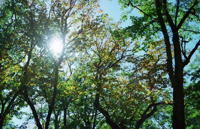 写真,素材,無料,フリー,フォト,クリエイティブ・コモンズ,風景,壁紙,杜の静かな秋, 緑, 枝, ,
