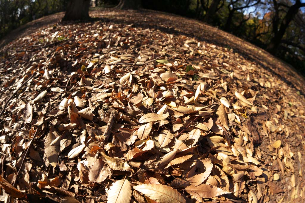 photo,material,free,landscape,picture,stock photo,Creative Commons,Autumn Park, Fallen leaves, Defoliation, Trees, Ground