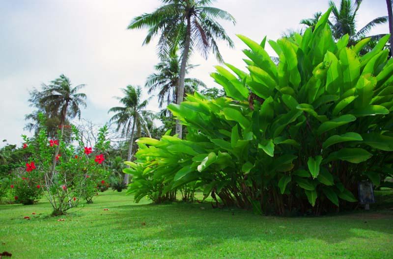 Foto, materieel, vrij, landschap, schilderstuk, bevoorraden foto,Tropische tuin, Boom, Zode, ,