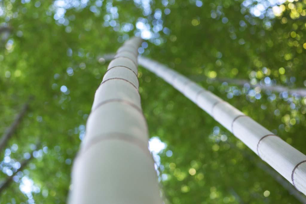 写真,素材,無料,フリー,フォト,クリエイティブ・コモンズ,風景,壁紙,竹のストーリー, 笹, バンブー, 節, 緑