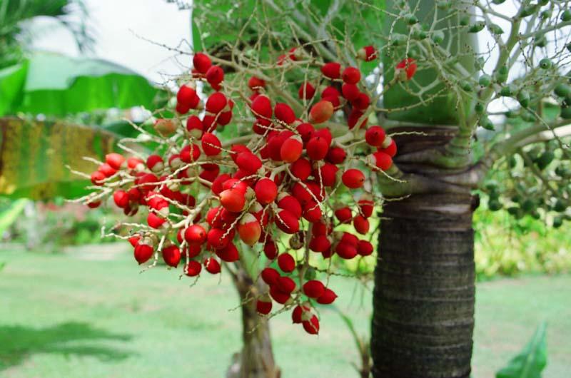 photo, la matière, libre, aménage, décrivez, photo de la réserve,Fruits rouges, fruit, rouge, ,