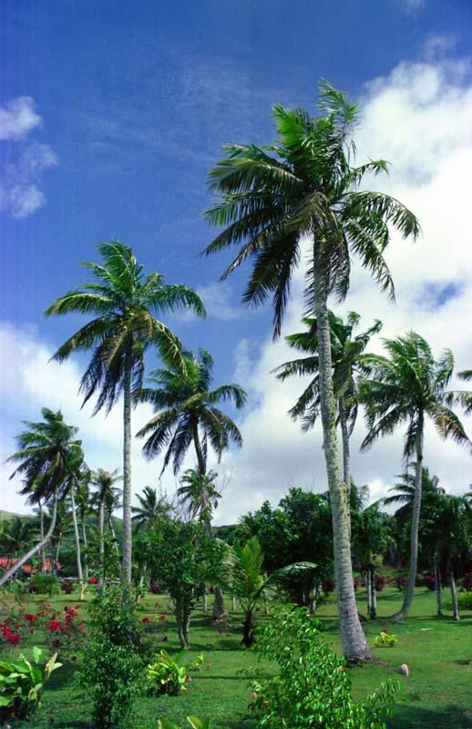 photo, la matière, libre, aménage, décrivez, photo de la réserve,Paradis de la paume, nuage, bleu, ,
