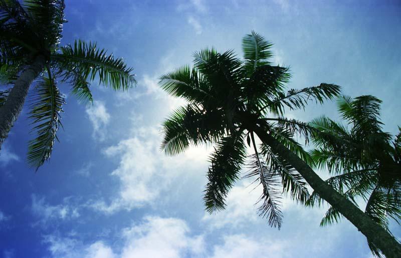 photo, la matière, libre, aménage, décrivez, photo de la réserve,Ombre de la paume, soleil, bleu, ,
