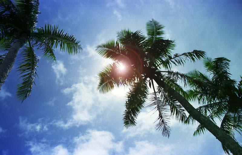 写真,素材,無料,フリー,フォト,クリエイティブ・コモンズ,風景,壁紙,椰子の木陰 改, 太陽, 青, ,