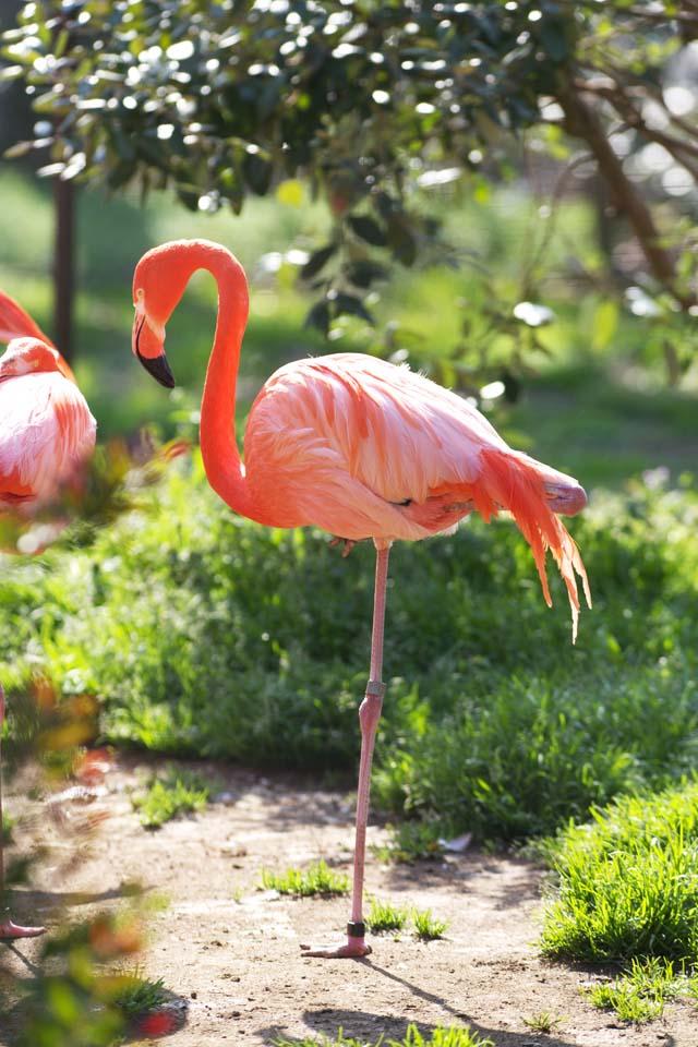 yun de vrije foto 39 s van de voorraad no 5960 een flamingo japan chiba prefecture. Black Bedroom Furniture Sets. Home Design Ideas