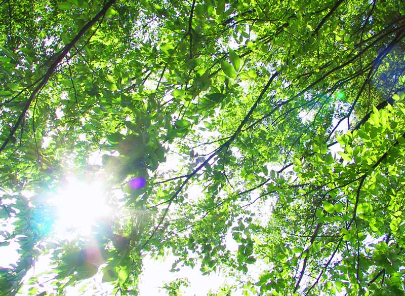photo,material,free,landscape,picture,stock photo,Creative Commons,May sunlight through leaves, leave, branch, sunlight,